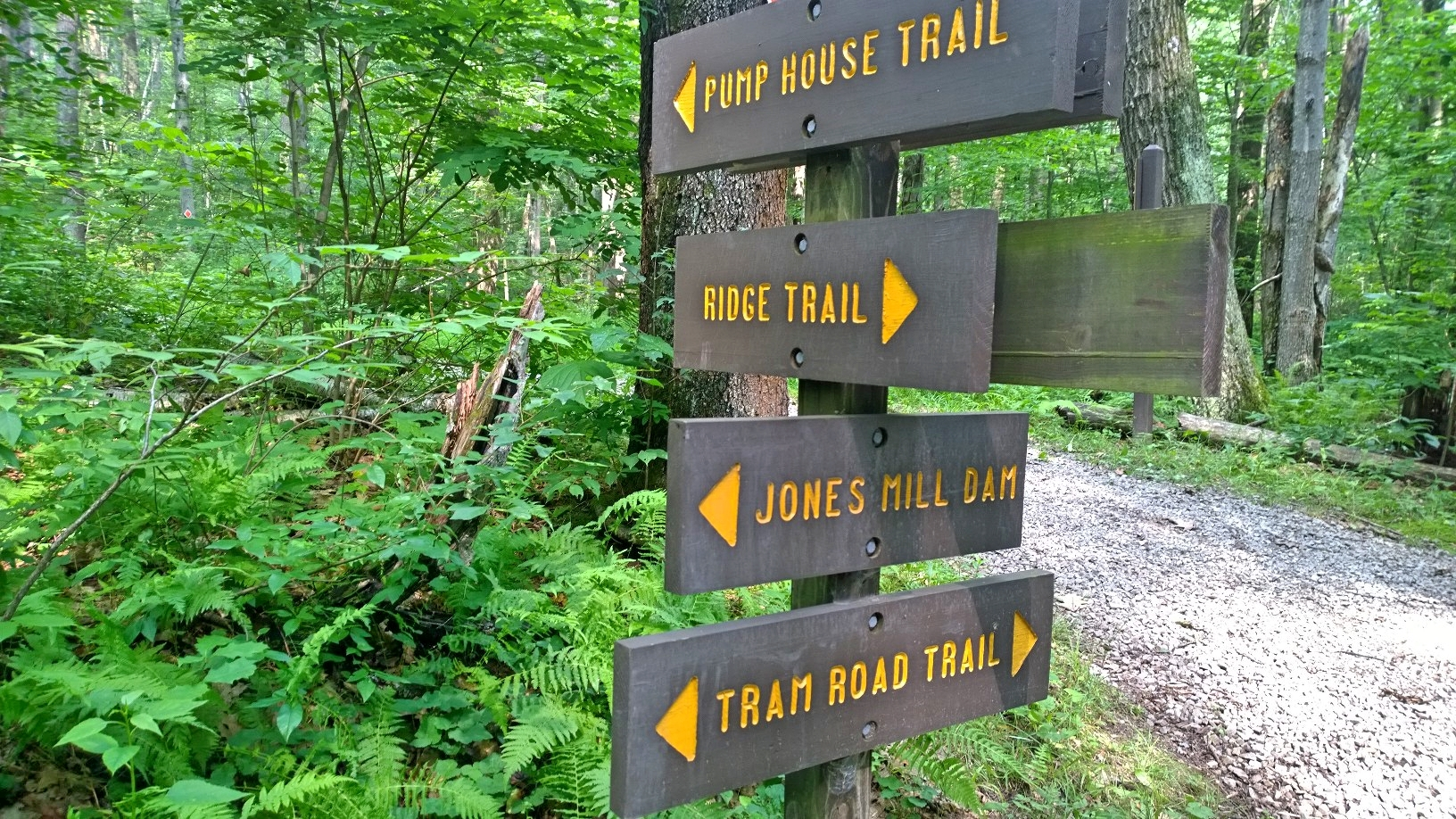 Just like you were there: Hiking at Laurel Hill State Park - Mandy Yokim